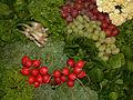 Broccoli, grapes, radish, DSCF2198.jpg