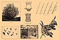Brockhaus and Efron Encyclopedic Dictionary b75 368-0.jpg