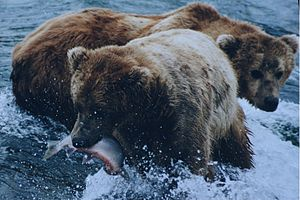 Most bears are omnivores, with the exception o...