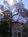"""Bucuresti, Romania. Biserica Sfantul Nicolae """"Dintr-o Zi"""" si copacul minune Paulownia. Aprilie 2019.jpg"""