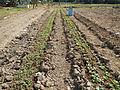 BulacanAgriculturalStateCollegejf6069 12.JPG