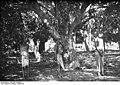 Bundesarchiv Bild 105-DOA0918, Deutsch-Ostafrika, Hinrichtung.jpg
