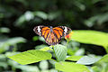 Butterfly-from-Koovery-2010.jpg