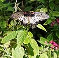 Butterfly Pavilion 8-23 (20320470283).jpg