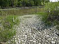 By the river in St. Norbert Provincial Park.jpg