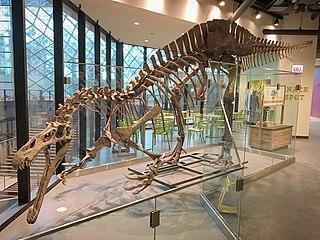 <i>Suchomimus</i>