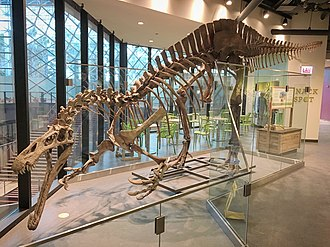 Suchomimus - Reconstructed skeleton at the Chicago Children's Museum