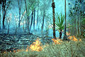 CSIRO ScienceImage 395 Authorised Burning in the Top End.jpg