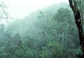 CSIRO ScienceImage 98 Mist in a Rainforest Valley.jpg