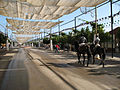 Caballos paseando por la Feria (1354863710).jpg
