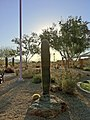 Cactus in Phoenix, Arizona (5434616073).jpg