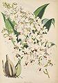 Calanthe vestita - Warner, Williams - Select orch. plants 1, pl. 29 (1862-1865).jpg