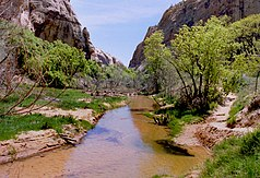 Calf Creek im Canyon