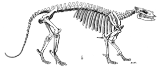 Recreación de fósiles de Phenacodus pertenecientes al género de los Condilartros
