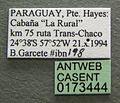 Camponotus rufipes casent0173444 label 1.jpg