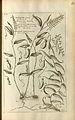 Cantharifera - Histoire universelle du règne végétal (1775-1778).jpg