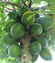 الفواكه 180px-Carica_papaya_-_papaya_-_var-tropical_dwarf_papaya_-_desc-fruit