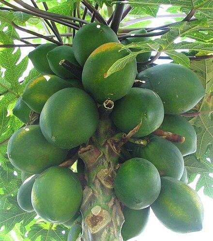 پھلوں کی فہرست Wikiwand