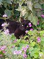 Cat in the garden.jpg