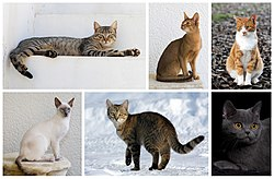 Six different breeds of cats.