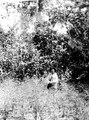 Cavinaindianen Salvador i sin cocaodling. Missionstn. Cavinas, nära R.Beni, Bolivia - SMVK - 005025.tif