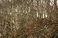 Cheile Vârghișului - Varghis Gorges - panoramio (29).jpg