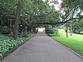 City Botanical pathway near QUT.jpg