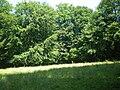 Clairière forêt du parc de st quentin.JPG