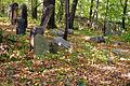 Cmentarz żydowski - Bieruń ul. Wita.jpg