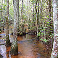 Coastal Plain stream, Georgia (4731041618).jpg