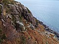 Coastal crag, Little Loch Broom - geograph.org.uk - 309595.jpg