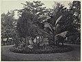 Collectie NMvWereldculturen, RV-A42-1-31, Foto, 'Perk met tropische plantsoorten in Batavia', fotograaf Woodbury & Page, ca. 1875.jpg