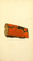 Coloured Figures of English Fungi or Mushrooms - t. 291.png