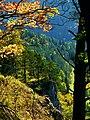 Coloured Oak - panoramio.jpg