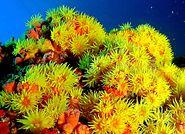 Coral Sol 01.JPG