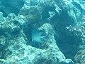 Coral World Underwater Observatory 39.jpg