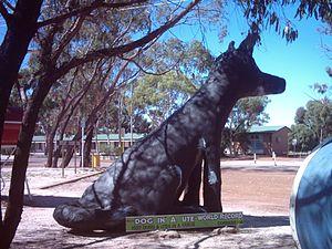 Corrigin, Western Australia - Statue of dog to commemorate world record 1,527 ute convoy 2003.