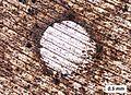 Corrosion of Duralumin.jpg