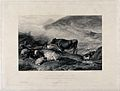 Cows and sheep by an upland stream with a goat standing in t Wellcome V0021727.jpg
