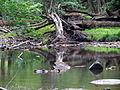 Crabtree Creek Mill Trail Umstead SP 3326 (5893867415) (2).jpg