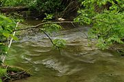 Creek - Long exposure (4614649564).jpg