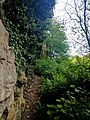 Creswell Gorge, Creswell Craggs, Notts (108).jpg