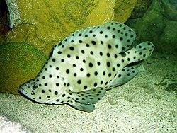 Det finns många fiskar i havet dating