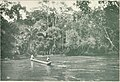 Crossing the Bumba, 1911.jpg