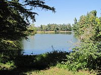 A quiet Lake Ponder viewed through a grove of lush green trees and bushes