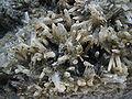 Crystal Formations Macro 3.JPG