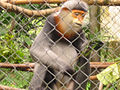 Cuc.Phuong.Primate.Rehab.center.jpg