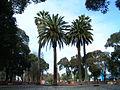 Curico, antes de monumento (15484369387).jpg