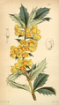 Curtis's Botanical Magazine, Plate 4308 (Volume 73, 1847).png