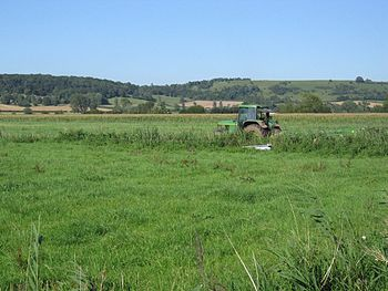 English: Cutting for silage A farmer cuts gras...